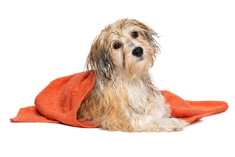 wet dog in orange towel